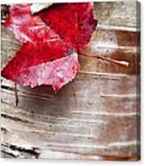 Captured Color Canvas Print