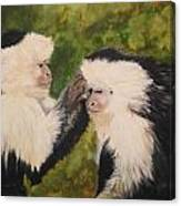 Capuchin Monkeys Charlotte And Samantha Half Proceeds Go To Jungle Friends Primate Sanctuary Canvas Print