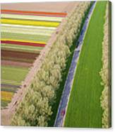 Car On Road Near Tulip Fields, Holland Canvas Print