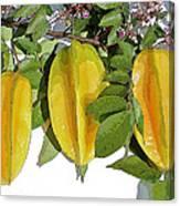 Carambolas Starfruit Three Up Canvas Print