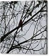 Cardinal Amongst The Branches Canvas Print
