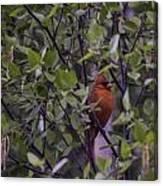 Cardinal At Dawn Canvas Print