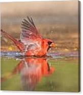 Cardinal Bath 3 Canvas Print