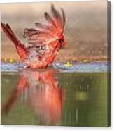 Cardinal Bath 4 Canvas Print