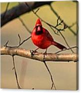 Cardinal Beauty Canvas Print