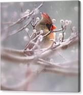 Cardinal - Bird - Lady In The Rain Canvas Print