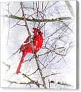 Cardinal Christmas-2014 Canvas Print