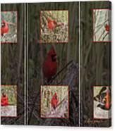 Cardinal Family Canvas Print