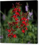Cardinal Flowers Canvas Print