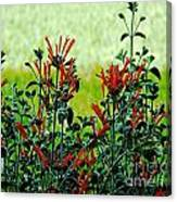 Cardinal Flowers Canvas Print