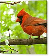 Cardinal In Red Canvas Print