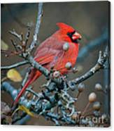 Cardinal In The Berries Canvas Print