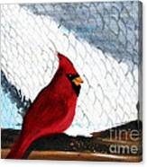 Cardinal In The Dogpound Canvas Print