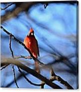 Cardinal In The Midst Canvas Print