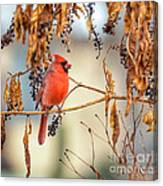Cardinal In The Pokeberries Canvas Print