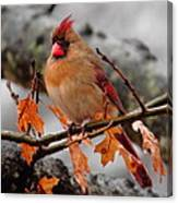 Cardinal In The Rain Canvas Print