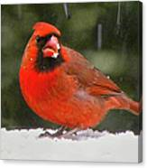 Cardinal In The Snowstorm Canvas Print