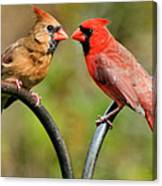 Cardinal Love Canvas Print