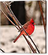 Cardinal On A Winter Day II Canvas Print