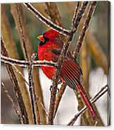 Cardinal On A Winter Day Canvas Print
