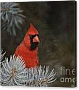 Cardinal Pictures 84 Canvas Print
