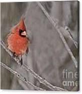 Cardinal Pictures 97 Canvas Print