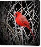 Cardinal Red With Black Canvas Print