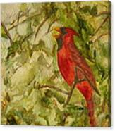 Cardinal Singing Canvas Print
