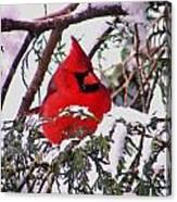 Cardinal Snowbound Canvas Print