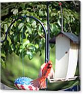 Cardinal Tail Wide Landing Digital Art Canvas Print