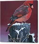 Cardinal Winter Songbird Canvas Print