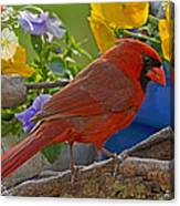 Cardinal With Pansies And Decorations Canvas Print