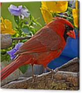 Cardinal With Pansies Canvas Print