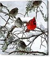 Cardinal With White Throated Sparrows Canvas Print