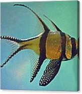 Cardinalfish Canvas Print