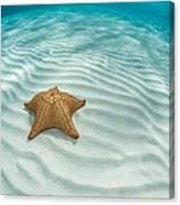 Caribbean Sea Star Canvas Print