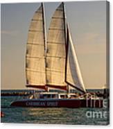 Caribbean Spirit Sails Miami Canvas Print