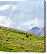 Caribou And Mount Mckinley Canvas Print