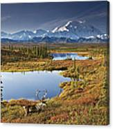 Caribou On Tundra In Denali Canvas Print