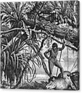 Caripuna Indians With Tapir, From The Amazon And Madeira Rivers, By Franz Keller, 1874 Engraving Canvas Print