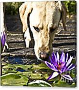 Carla's Dog Canvas Print