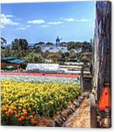 Carlsbad Flower Fields Canvas Print