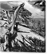 Carmel Beach City Park Black And White Canvas Print
