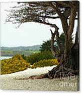 Carmel California Beach Canvas Print