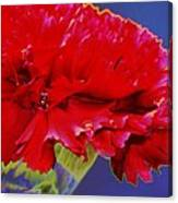 Carnation Carnation Canvas Print