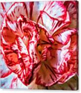 Carnation Watercolor Canvas Print