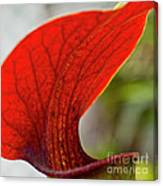 Carnivorous Plants 2 Canvas Print