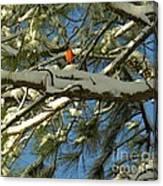 Carolina Cardinal Canvas Print