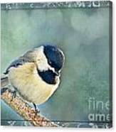 Carolina Chickadee With Decorative Frame I Canvas Print