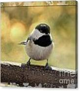 Carolina Chickadee With Decorative Frame IIi Canvas Print